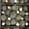 Broccoli (Wrapped)