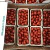 Tomatoes Cherry Plum Punnet
