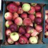 Apples Scrumptious