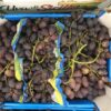 Grapes Red Crimson Seedless