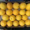 Oranges Medium Cal 72's