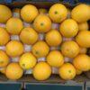 Oranges Small Cal 88's
