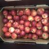 Apples Gala Mole End