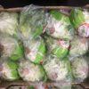 Lettuce Oakleaf Green