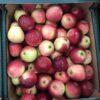 Apples Worcester