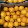 Oranges Small Cal 7/8
