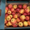 Apples Akane