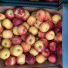 Apples James Grieves