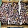 Grapes Napoleon Seeded