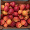 Apples Cox Royale