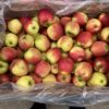 Apples Falstaff