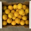 Oranges Regular Cal 7/8