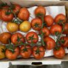 Tomatoes Vine