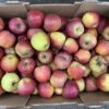Apples Kids Orange