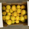 Oranges Small Cal 10