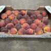Peach Cal B