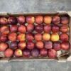 Nectarines Cal B