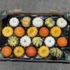Squash Mixed Mini Pumpkin Tray